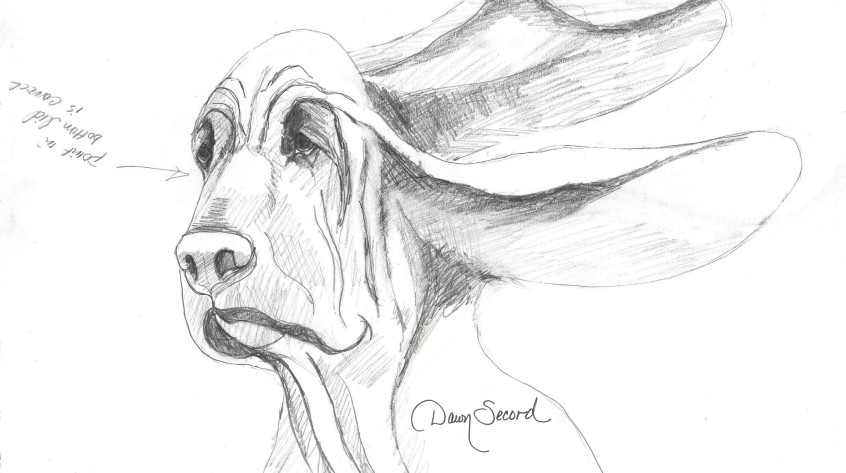 bloodhound cover sketch with signature