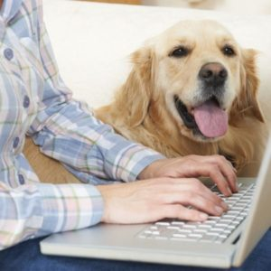 dog writer on computer